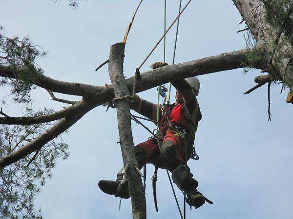 D montage d 39 arbres mal plac s d montage arbre saint for Tarif jardinier